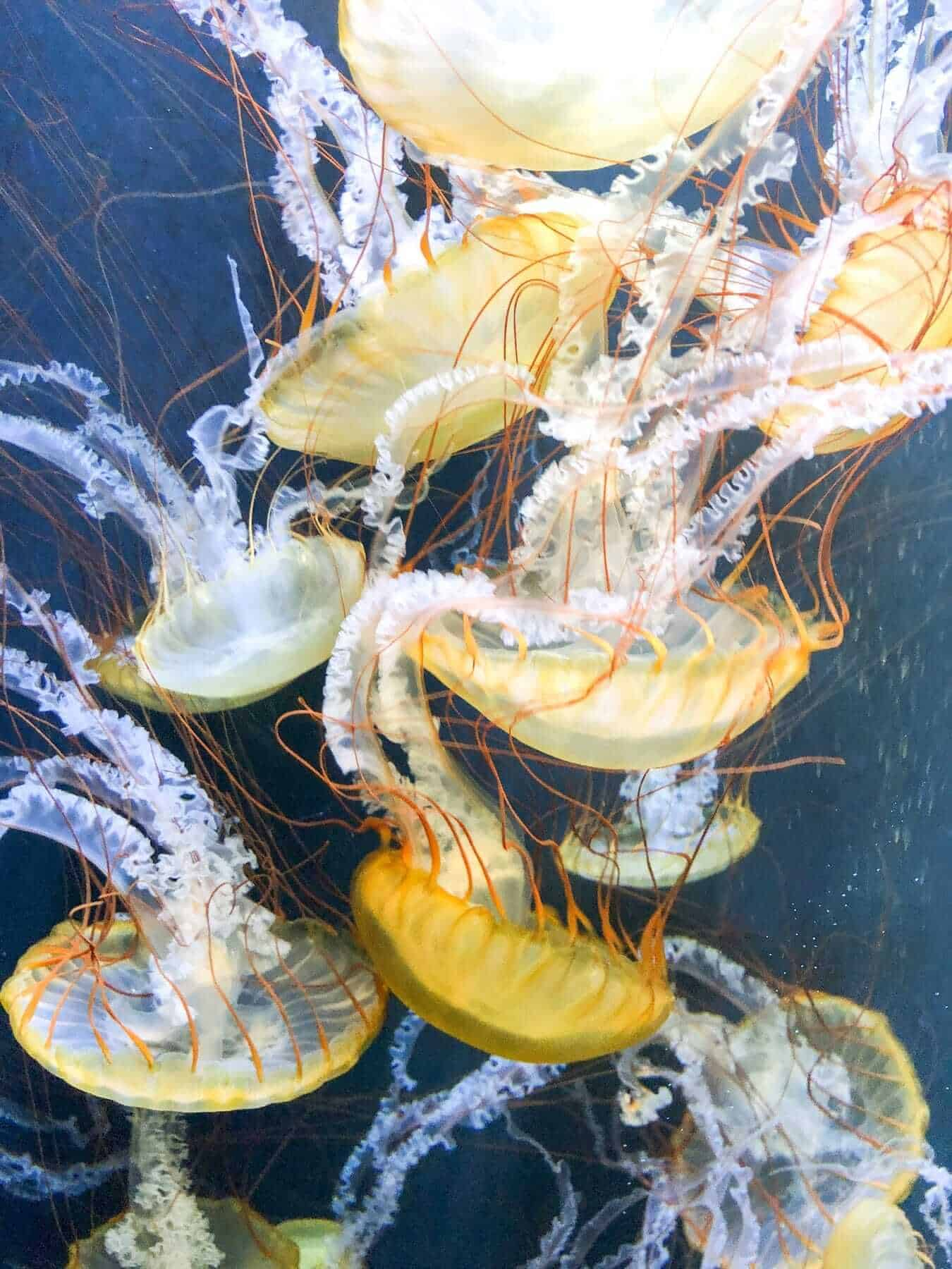 Aquarium of the Bay, San Francisco, USA