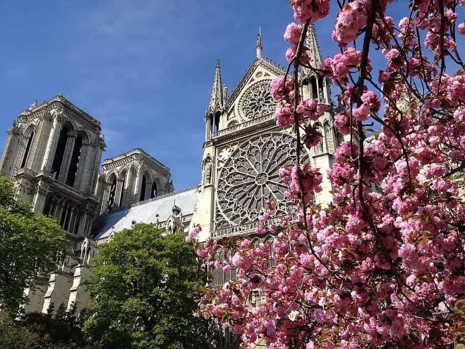 Cherry blossom - Notre Dame, Paris