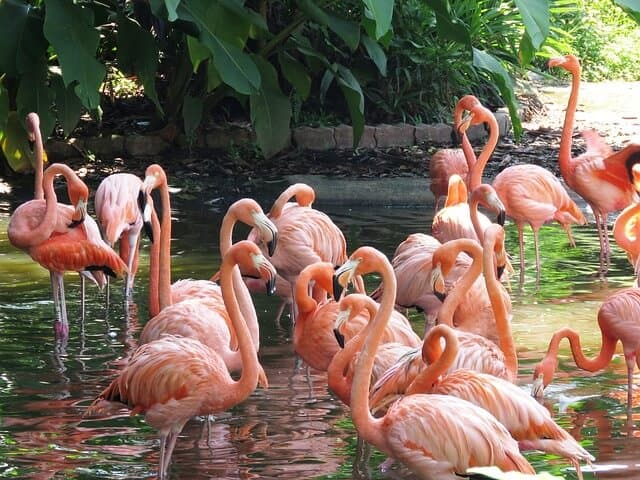 Flamingo Lake at Jurong Bird Park, Singapore