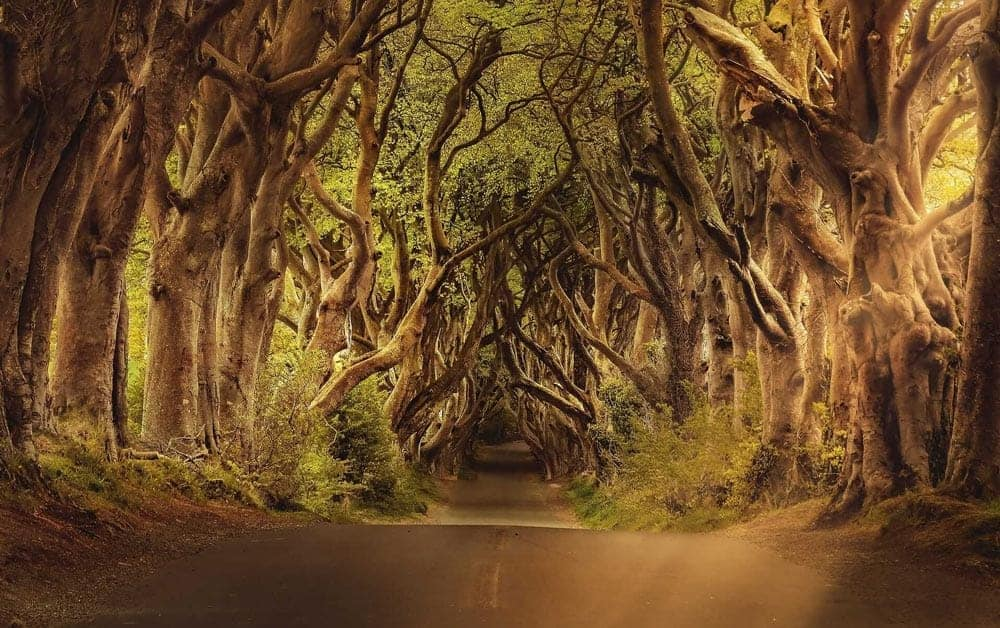 Game of Thrones Locations - King's Road, Dark Hedges, Ballymoney, Ireland