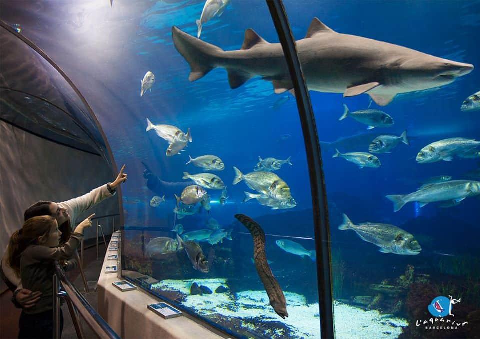 L' Aquarium-de- Barcelona-spain