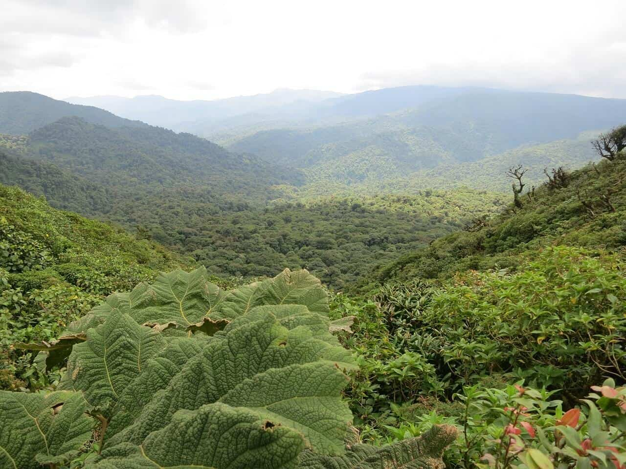 Monteverde-jungle-Costa-rica