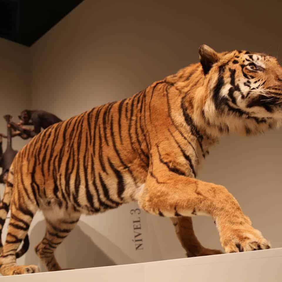 Museu-de-Zoologia-sao-paulo