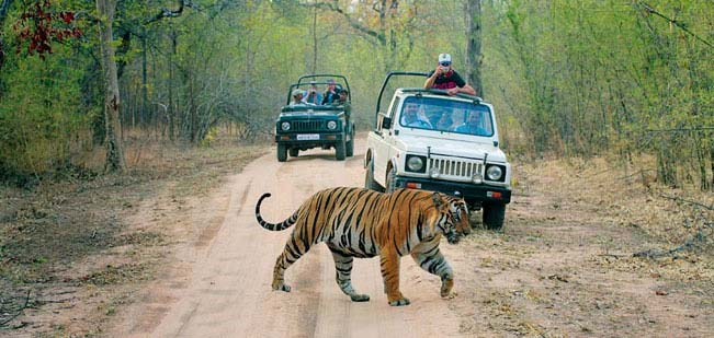 Ranthambore National Park is a great place to encounter the Royal Bengal Tiger.