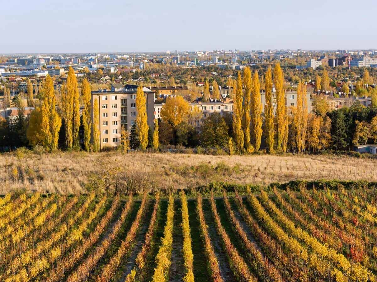Wine-Yard-Bratislava