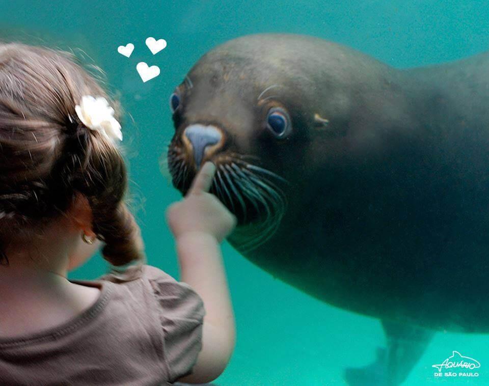 kid at aquario-de-sao-paulo-aquarium