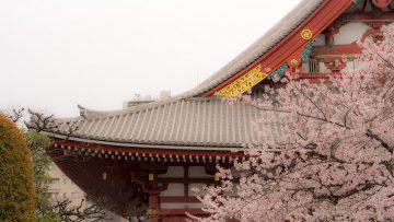 asakusa-Tokyo-Japan-cherry-blossom