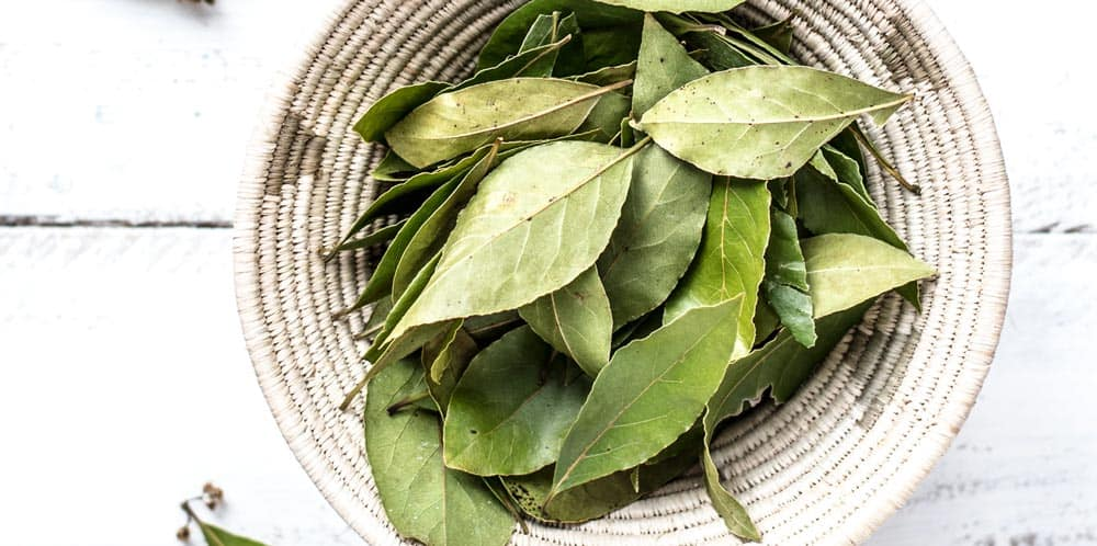 bay leaves england