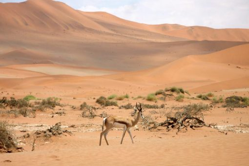 best travel contests october 2019 namibia
