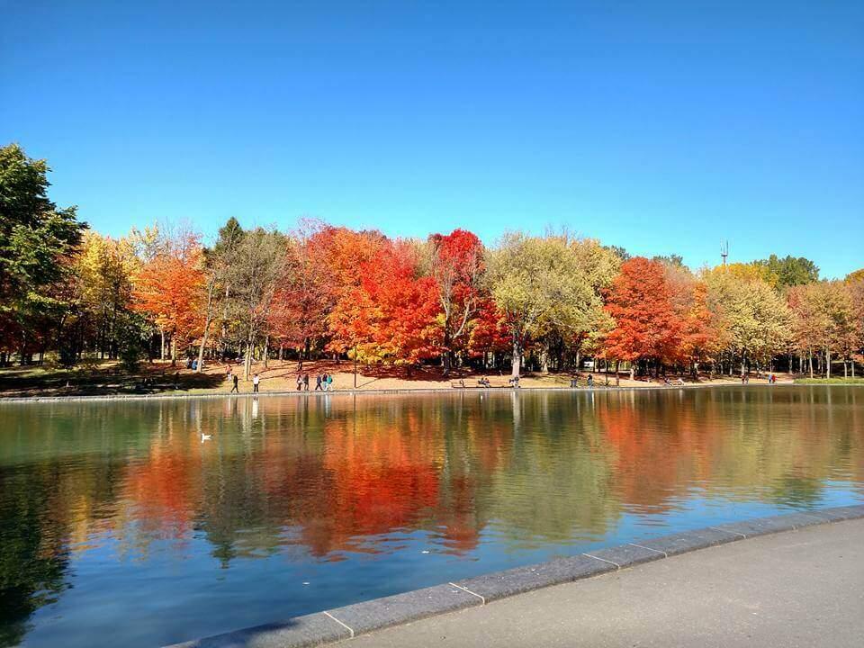 fall-mont-royal-Montreal, Canada