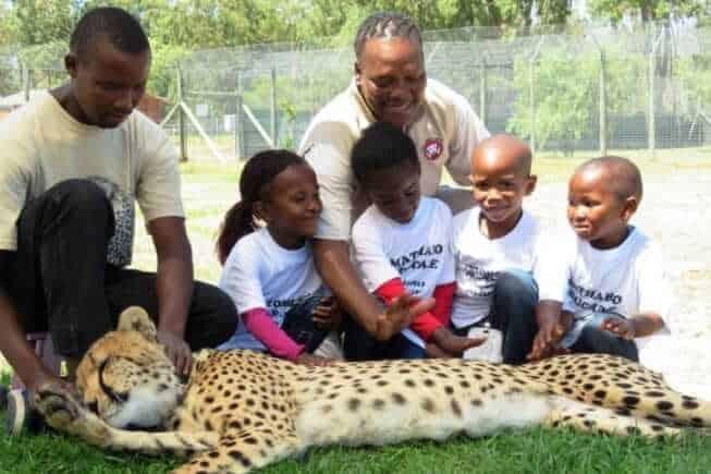 Cheetah Outreach, Cape Town, South Africa
