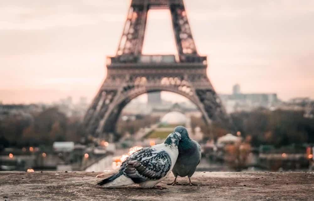 Paris Eiffel Tower valentine's day around the world