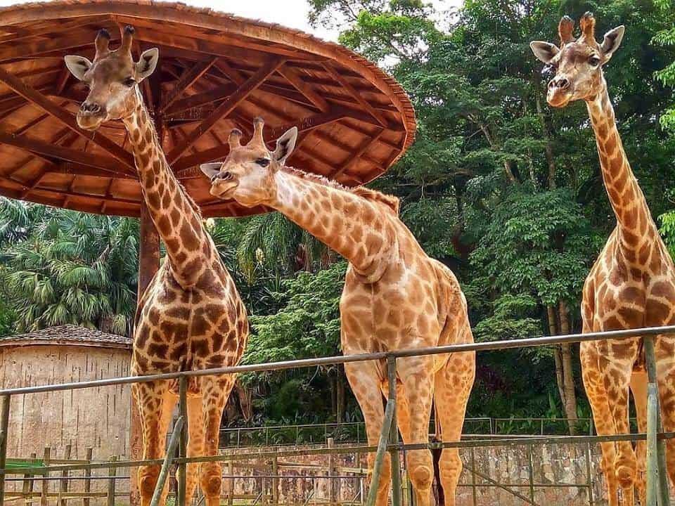 sao-paulo-zoo-brazil