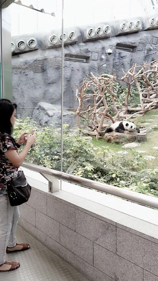 Pandas in Macau
