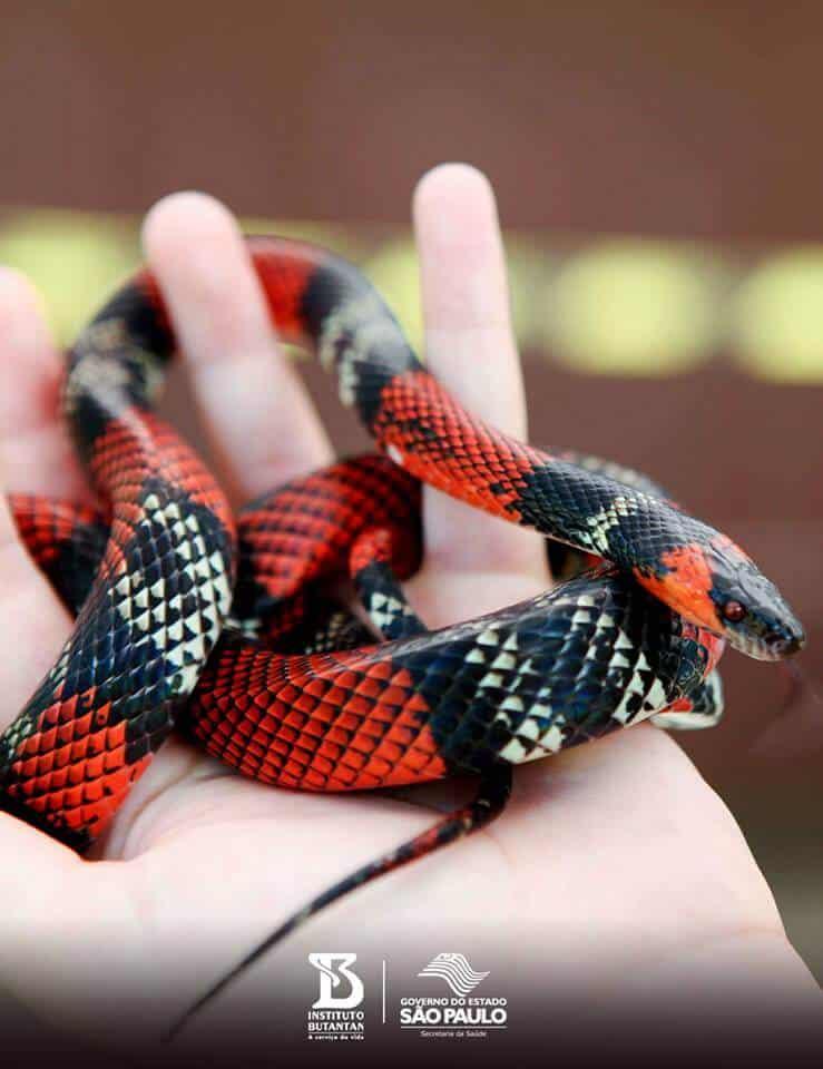 snake-in-hand-program-instituto-butantan-saopaulo
