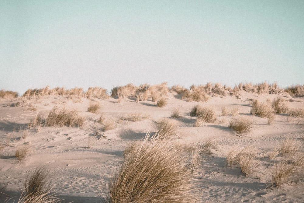 Dunes in Netherlands